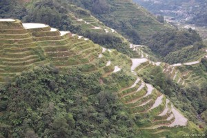 Reisterrassen oberhalb von Banaue